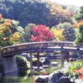 大仙公園日本庭園(4)