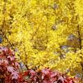 大仙公園日本庭園(5)