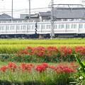 Photos: 散歩写真