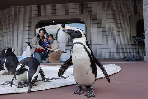 09_ペンギン