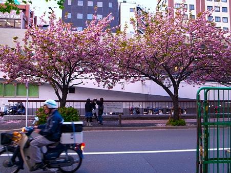銀座桜通りで桜を撮影する女性2人