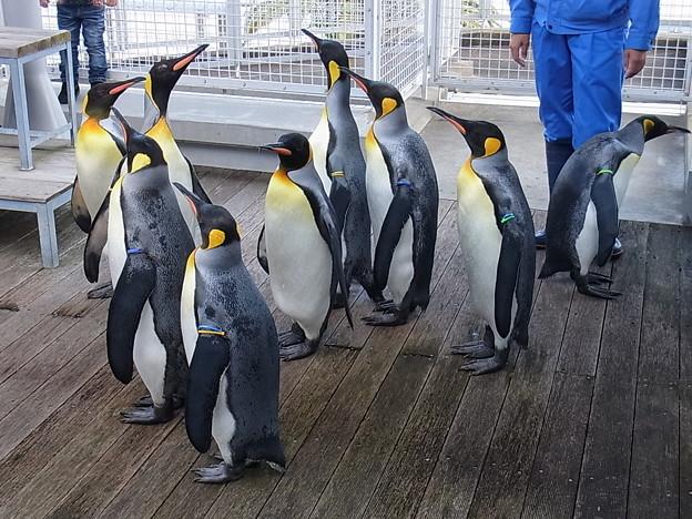 20141129 長崎ペンギン水族館08