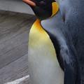 20141129 長崎ペンギン水族館09