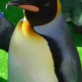 20141129 長崎ペンギン水族館17