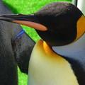 20141129 長崎ペンギン水族館18