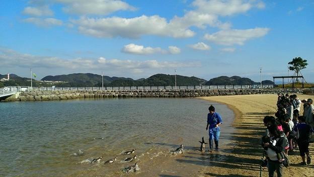 20141129 長崎ペンギン水族館26