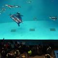 20150103 長崎ペンギン水族館 16