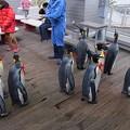20150103 長崎ペンギン水族館 19