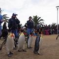 20150103 長崎ペンギン水族館 22