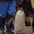 20150103 長崎ペンギン水族館 25
