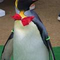 20150103 長崎ペンギン水族館 28