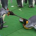20150103 長崎ペンギン水族館 31