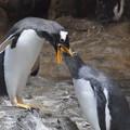 写真: 20170923 長崎ペンギン水族館15