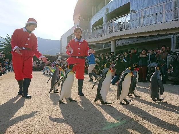 20171223 長崎ペンギン水族館12