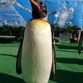 20171223 長崎ペンギン水族館18