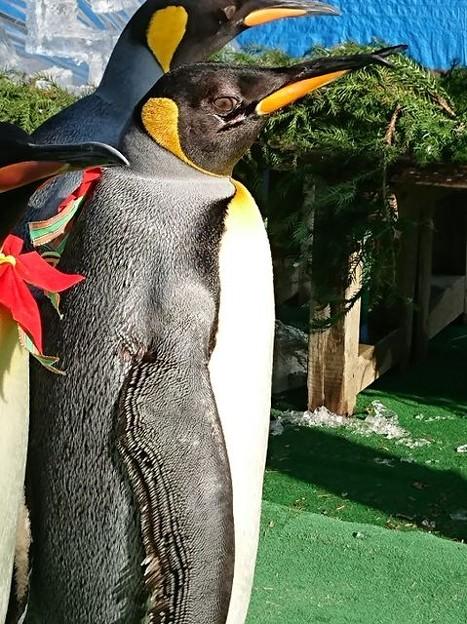 20171223 長崎ペンギン水族館19