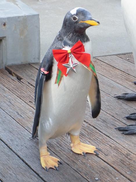 20171223 長崎ペンギン水族館23