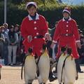 20171223 長崎ペンギン水族館27