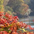 Photos: 宮ケ瀬湖畔の紅葉