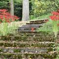 写真: 階段と彼岸花
