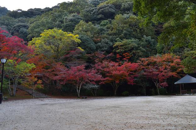 写真: 紅葉谷公園の紅葉