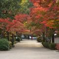 写真: 紅葉谷公園
