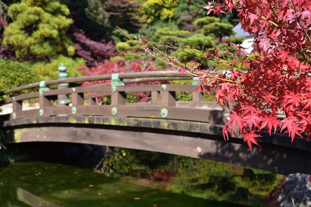 長府庭園紅葉 3