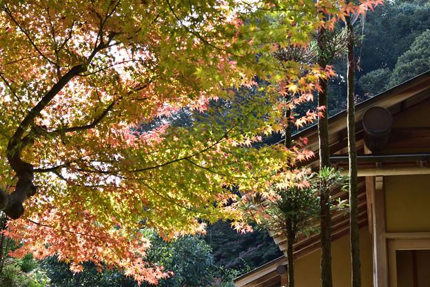 長府庭園紅葉 9