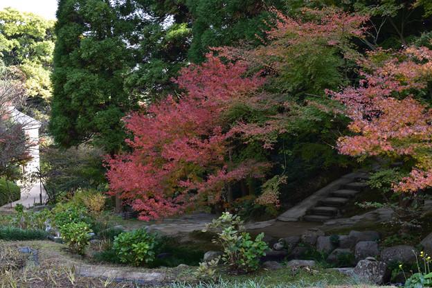 長府庭園紅葉 12