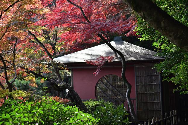 長府庭園紅葉 14