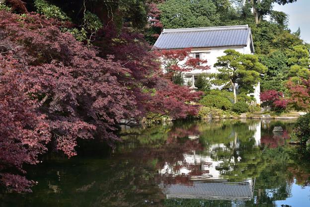 長府庭園紅葉 15