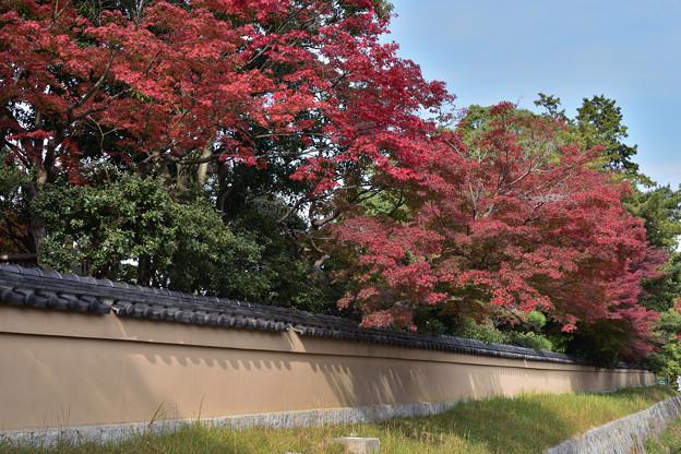 長府庭園紅葉 17