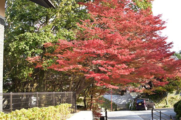 下関市立歴史博物館脇の紅葉