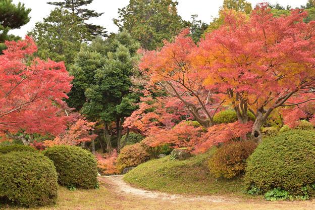 毛利氏庭園の紅葉 12