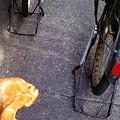 Photos: 倒れないように、自転車はみんなこう。