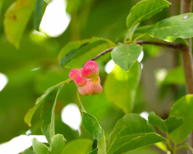 写真: 実か 花?