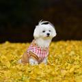 黄色い絨毯に~~