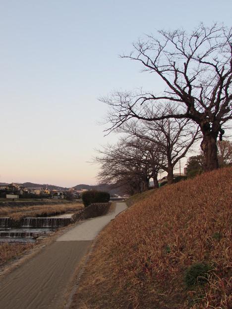高野川冬景色2