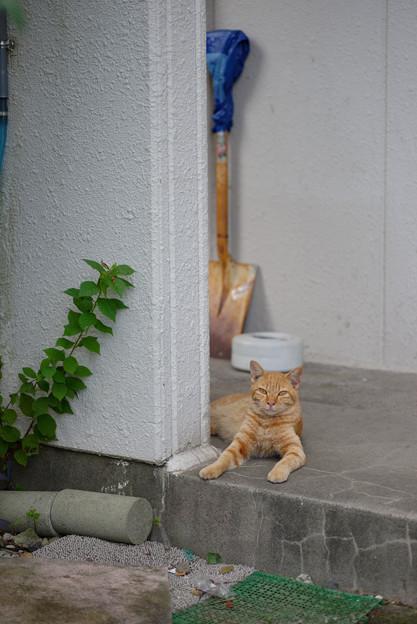 スコップ猫
