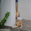 Photos: スコップ猫