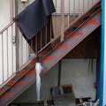 写真: 階段の傘