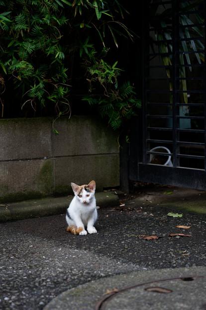 写真: 子猫