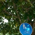 写真: 木陰の二人