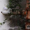 写真: 錆と花