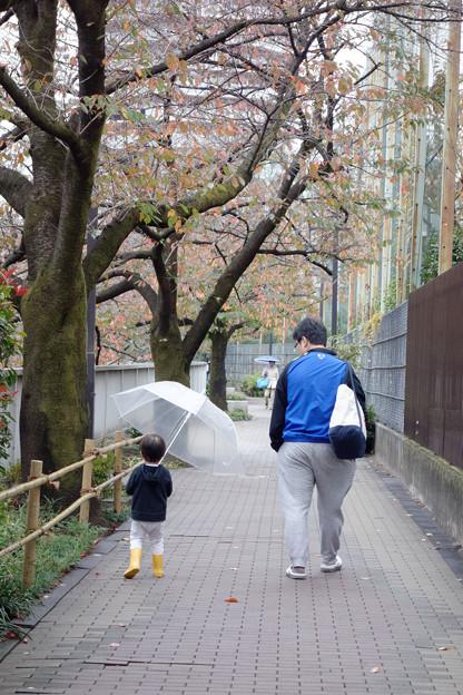 写真: 雨の日に