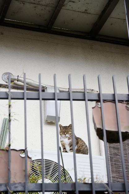 みおろす猫