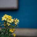 写真: 花-雨の日