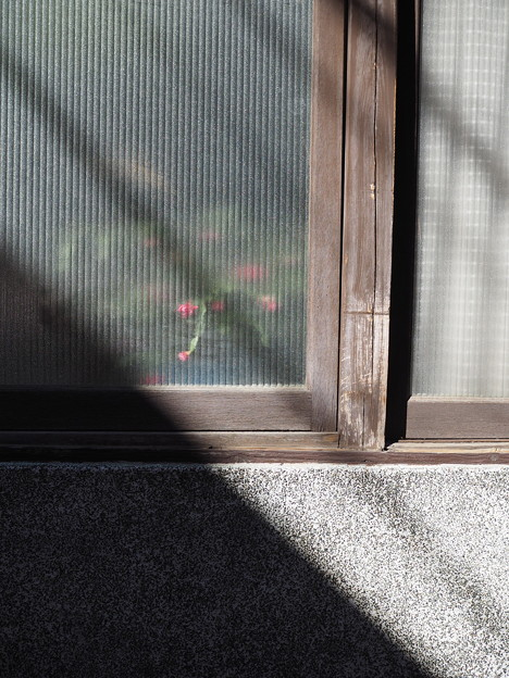 Photos: 窓の花