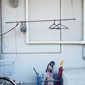 写真: 傘とハンガー