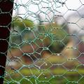 写真: フェンス-雨の日